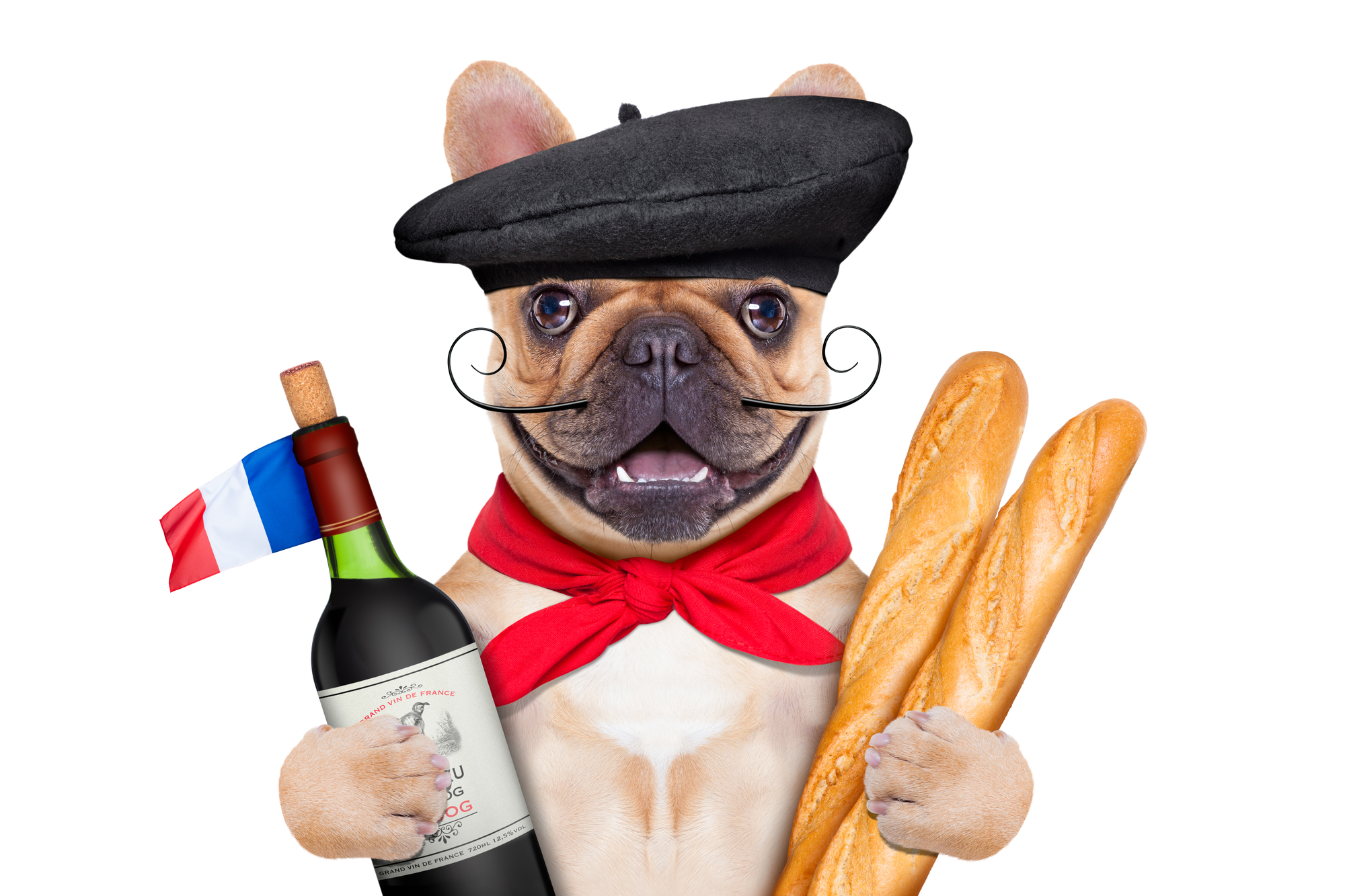 French Vegan Humor